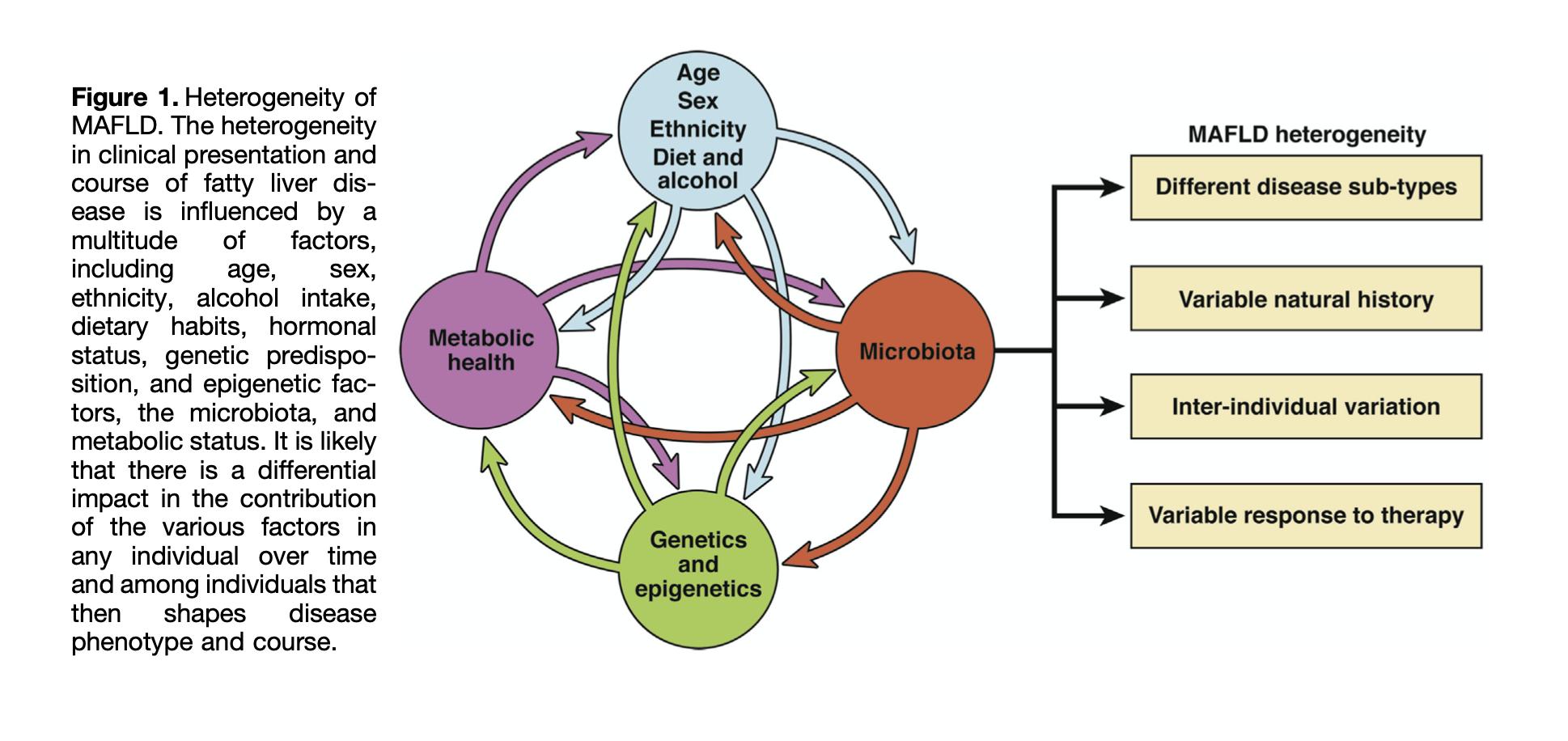 "Eslam, Mohammed, Arun J. Sanyal, Jacob George, Arun Sanyal, Brent Neuschwander-Tetri, Claudio Tiribelli, David E. Kleiner, et al. ""MAFLD: A Consensus-Driven Proposed Nomenclature for Metabolic Associated Fatty Liver Disease.""  Gastroenterology  158, no. 7 (May 2020): 1999-2014.e1.  https://doi.org/10.1053/j.gastro.2019.11.312 ."