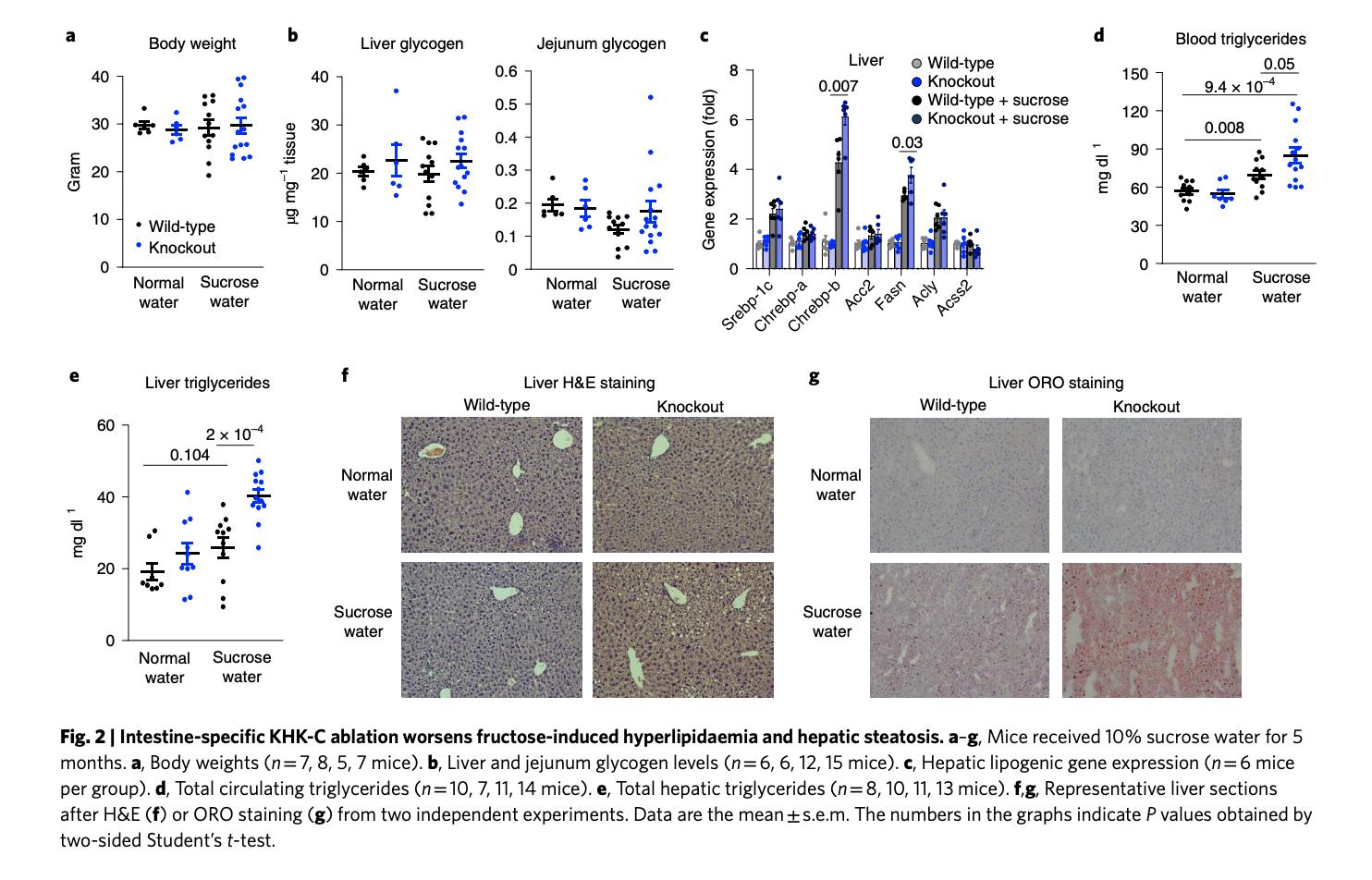 """Jang, Cholsoon, Shogo Wada, Steven Yang, Bridget Gosis, Xianfeng Zeng, Zhaoyue Zhang, Yihui Shen, Gina Lee, Zoltan Arany, and Joshua D. Rabinowitz. """"The Small Intestine Shields the Liver from Fructose-Induced Steatosis.""""  Nature Metabolism  2, no. 7 (July 2020): 586–93.  https://doi.org/10.1038/s42255-020-0222-9 ."""
