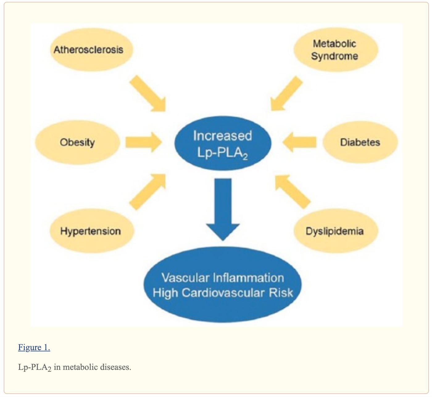 "De Stefano, Alessandro, Liliana Mannucci, Federica Tamburi, Carmine Cardillo, Francesca Schinzari, Valentina Rovella, Steven Nisticò, Luigi Bennardo, Nicola Di Daniele, and Manfredi Tesauro. ""Lp-PLA 2 , a New Biomarker of Vascular Disorders in Metabolic Diseases.""  International Journal of Immunopathology and Pharmacology  33 (January 2019): 205873841982715.  https://doi.org/10.1177/2058738419827154 ."